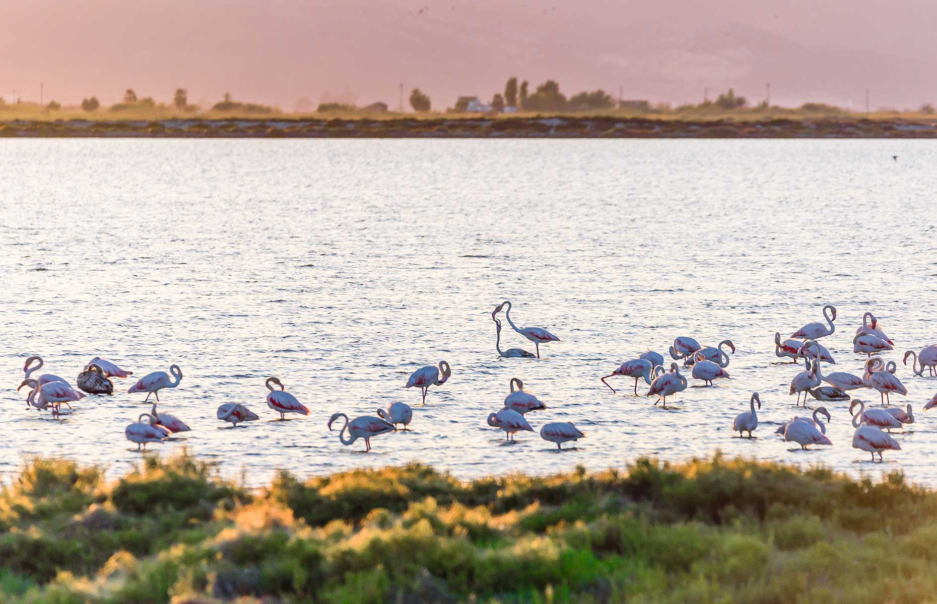 Flamingoes in the Delta del Ebro (Image: gg-foto/Shutterstock)