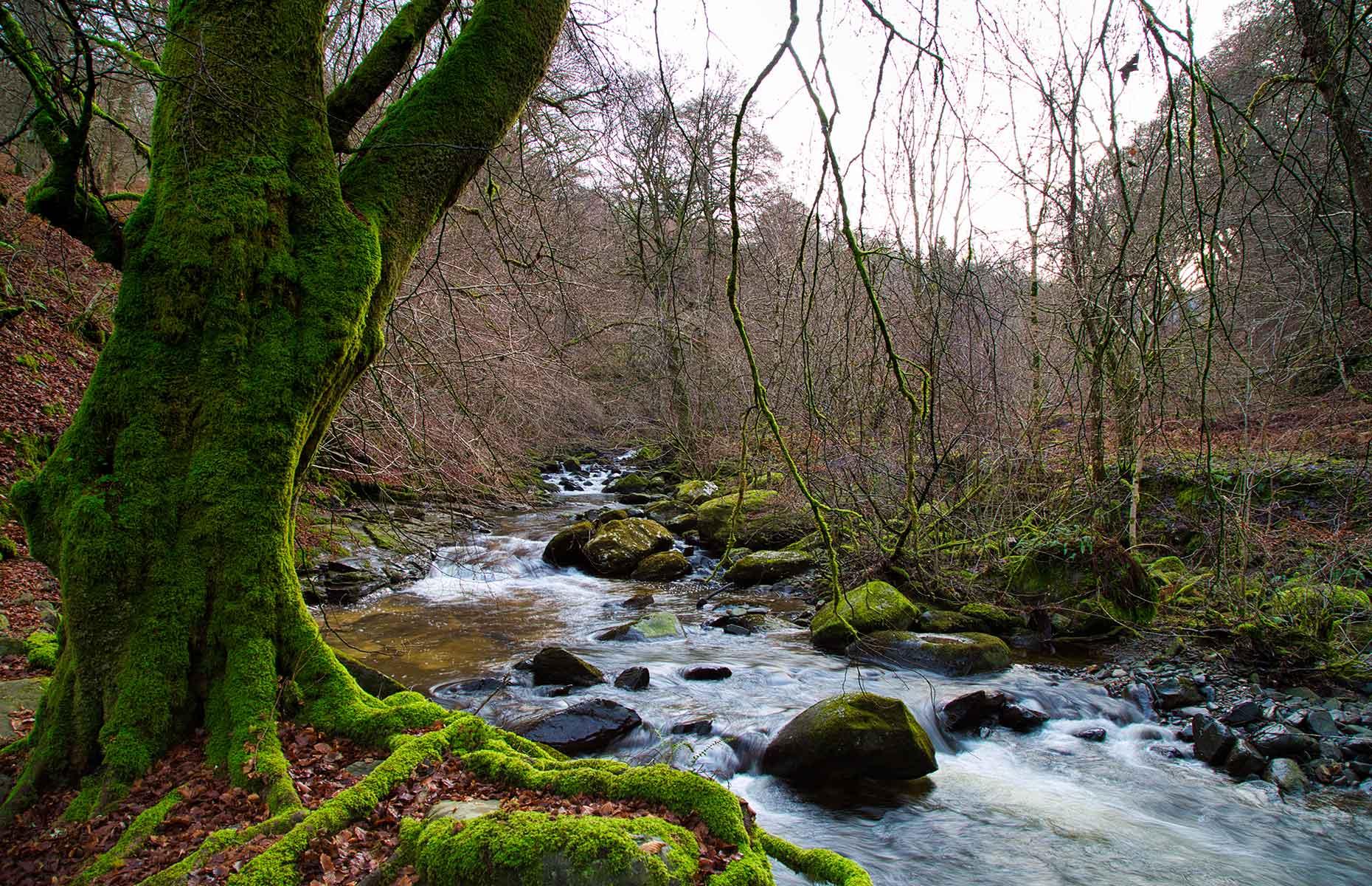 Birks of Aberfeldy (Image: Alex Nicol/Shutterstock)