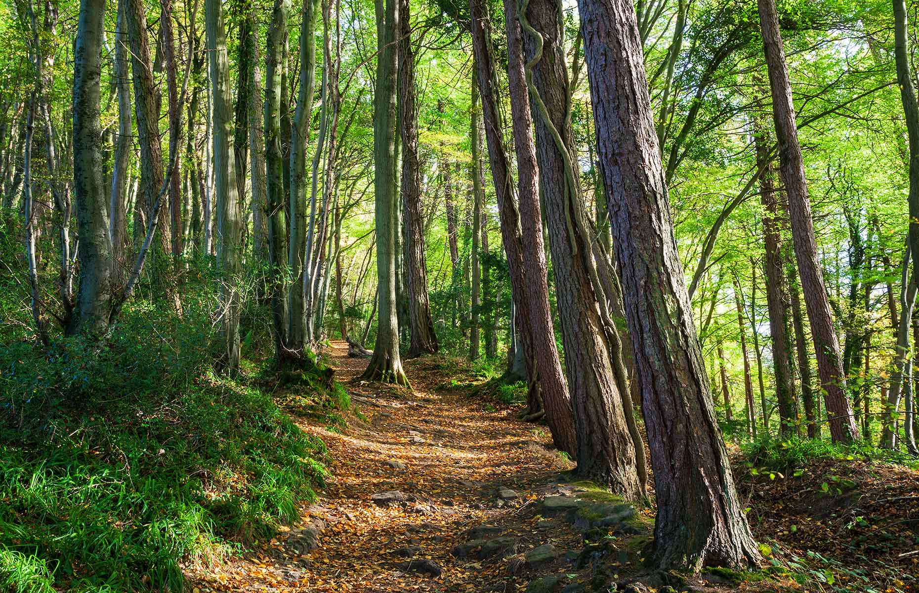 Wye Valley (Image: Billy Stock/Shutterstock)