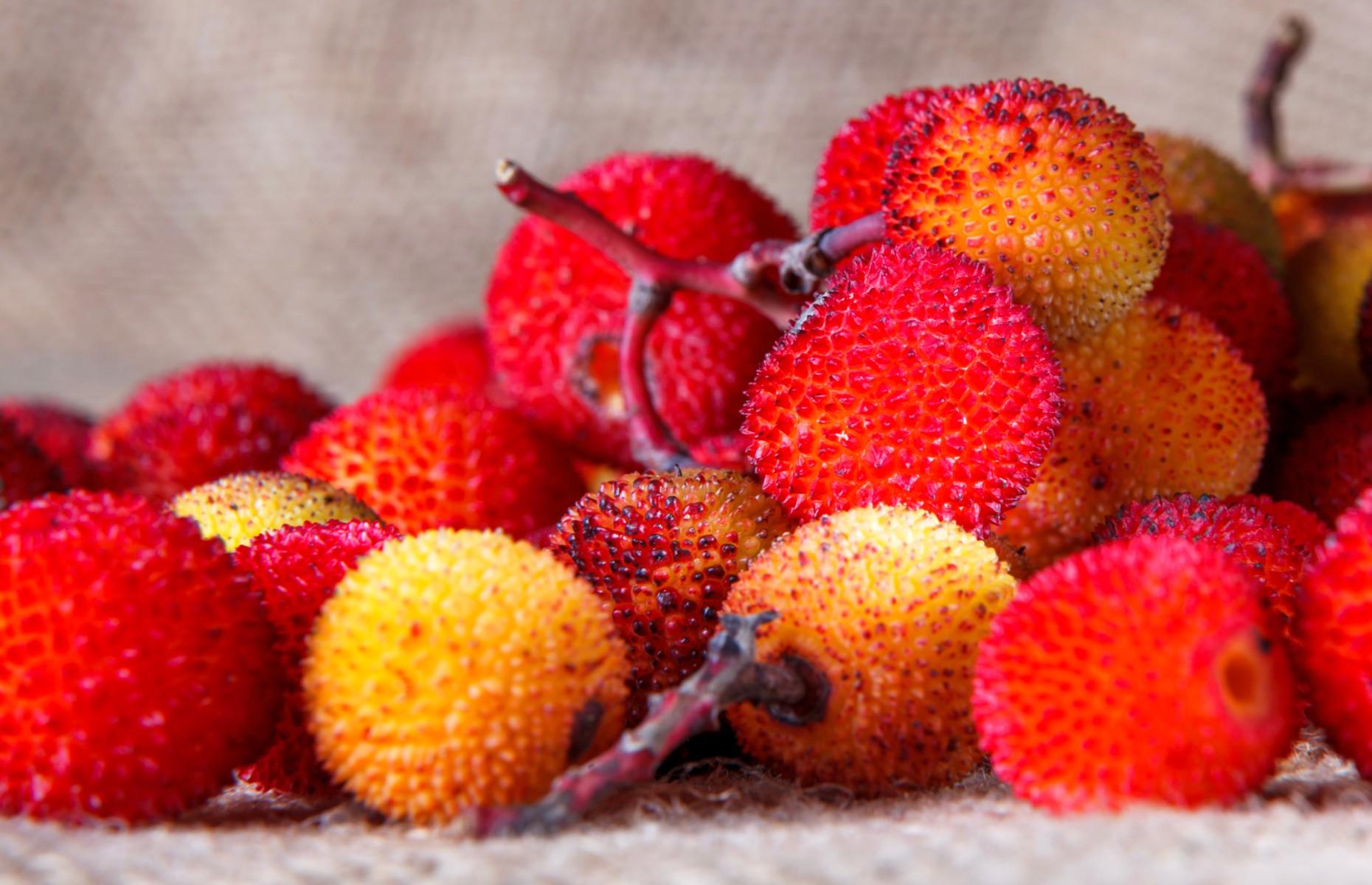 Medronho berries (Image: Francisco Duarte Mendes/Shutterstock)