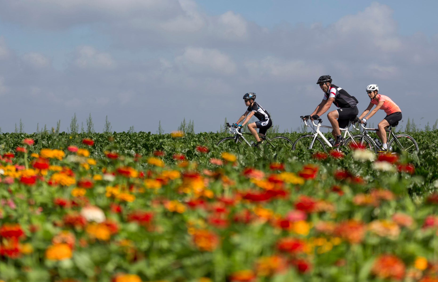 Cycling in Holland (Image: NBTC Holland Marketing)