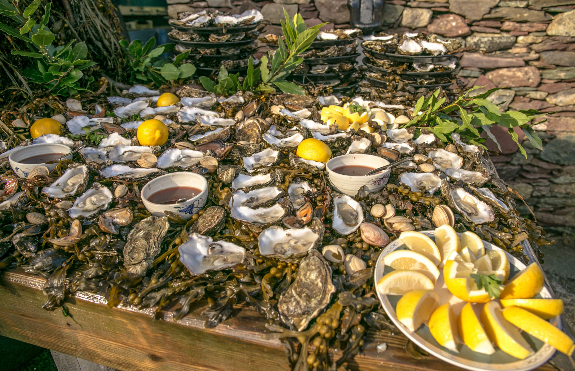 Galway_oysters