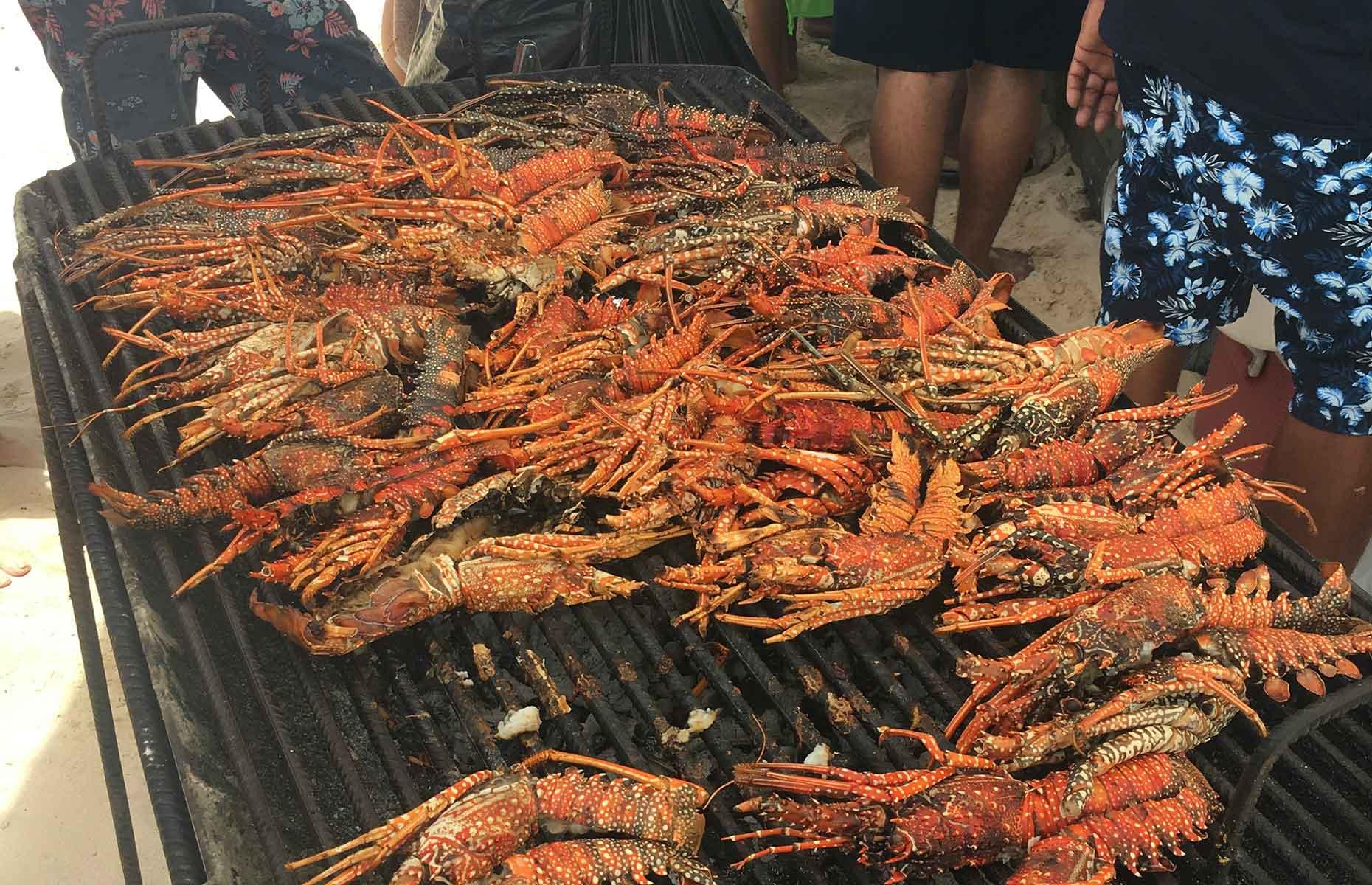 Shrimp, Sandy Ground