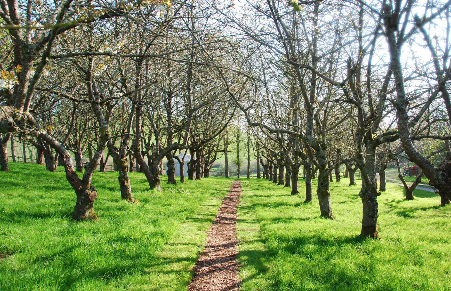 Walnut Farm Orchard, Dorset