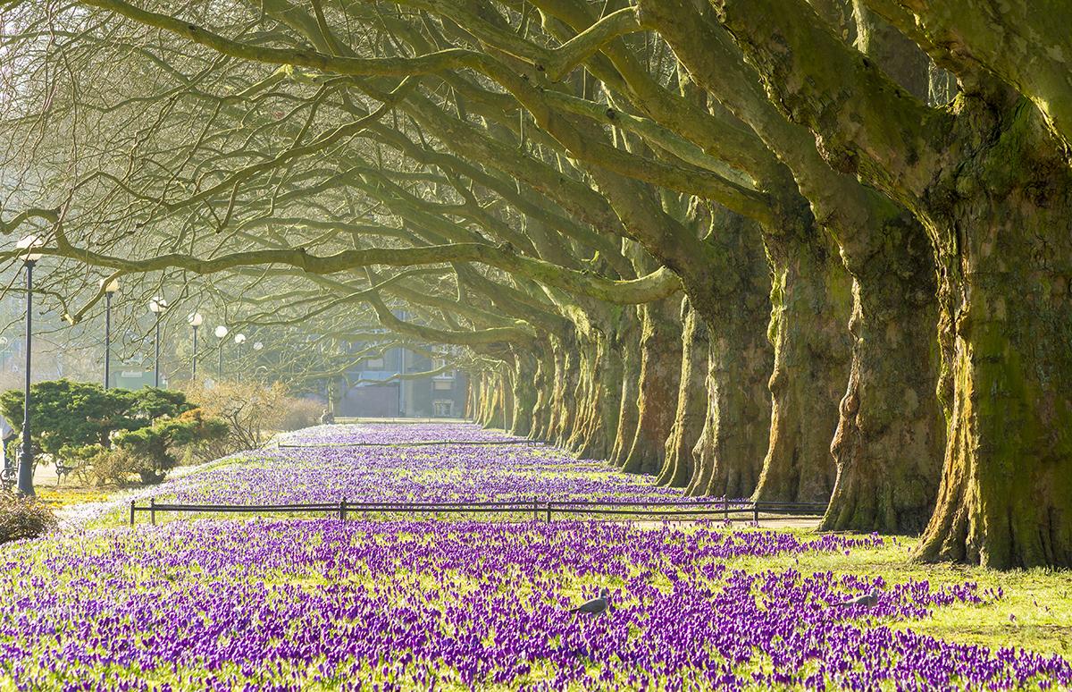 Harrogate flowerbeds