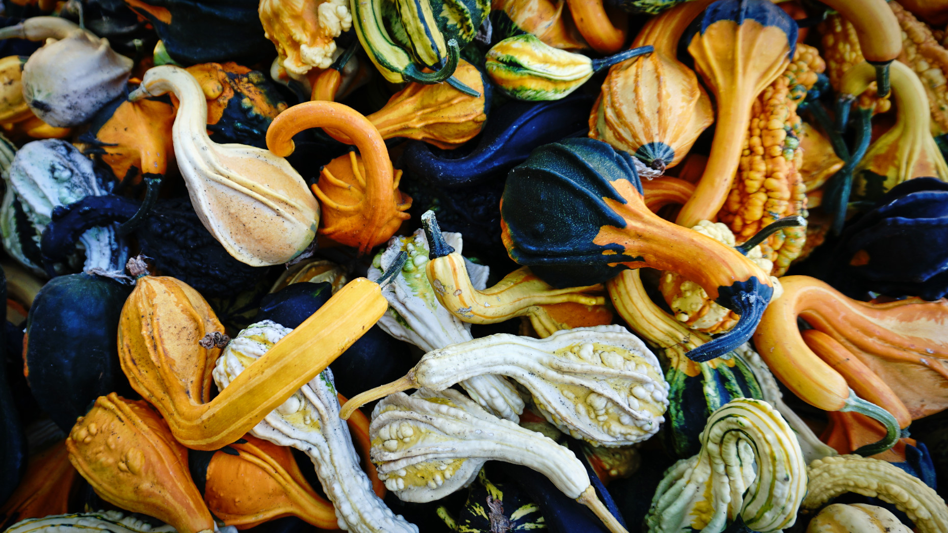 Squash at Davison Country Orchards, Vernon, Canada (Image: Lottie Gross)