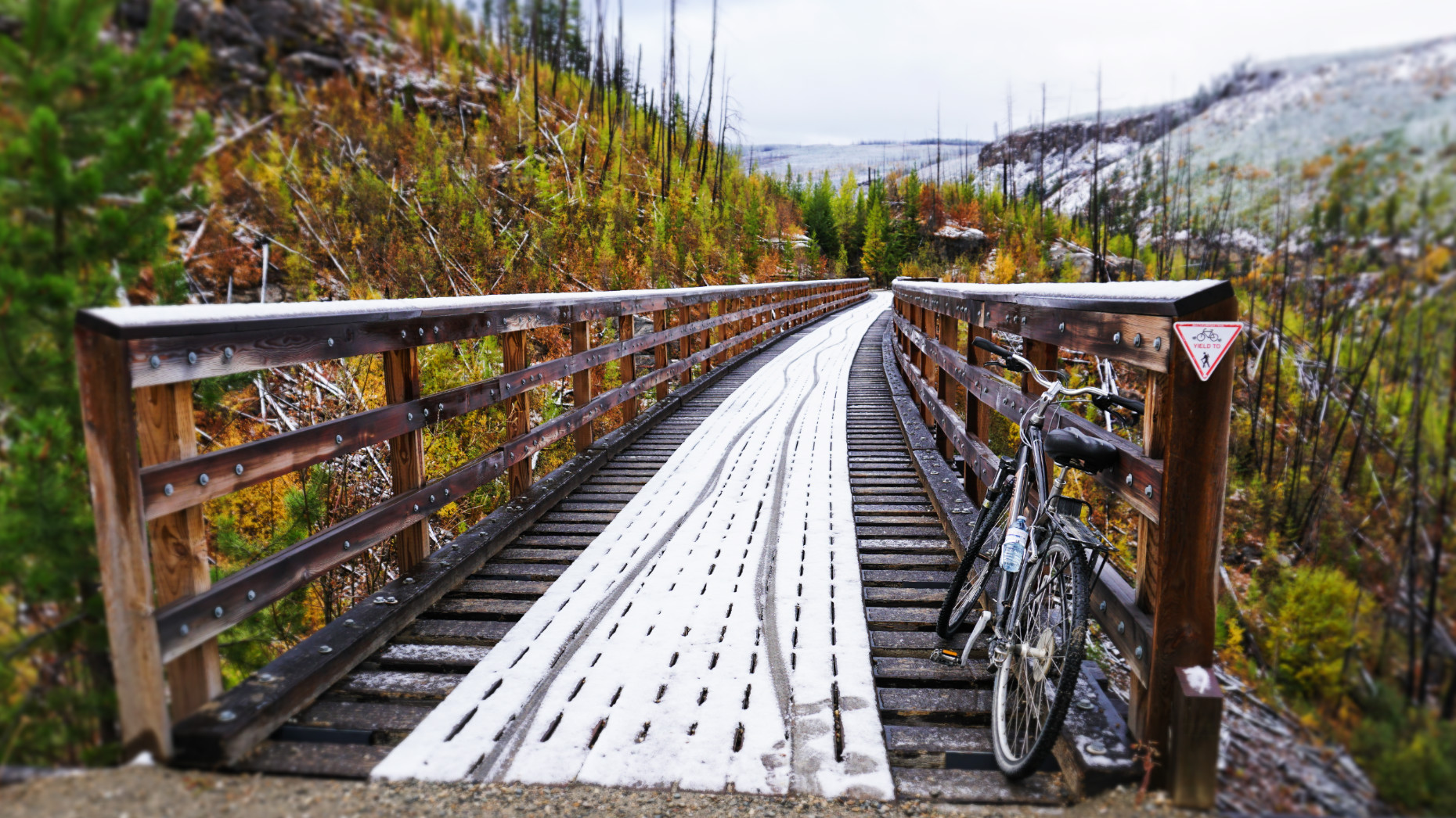 Myra Canyon, trestles  (Image: Lottie Gross)