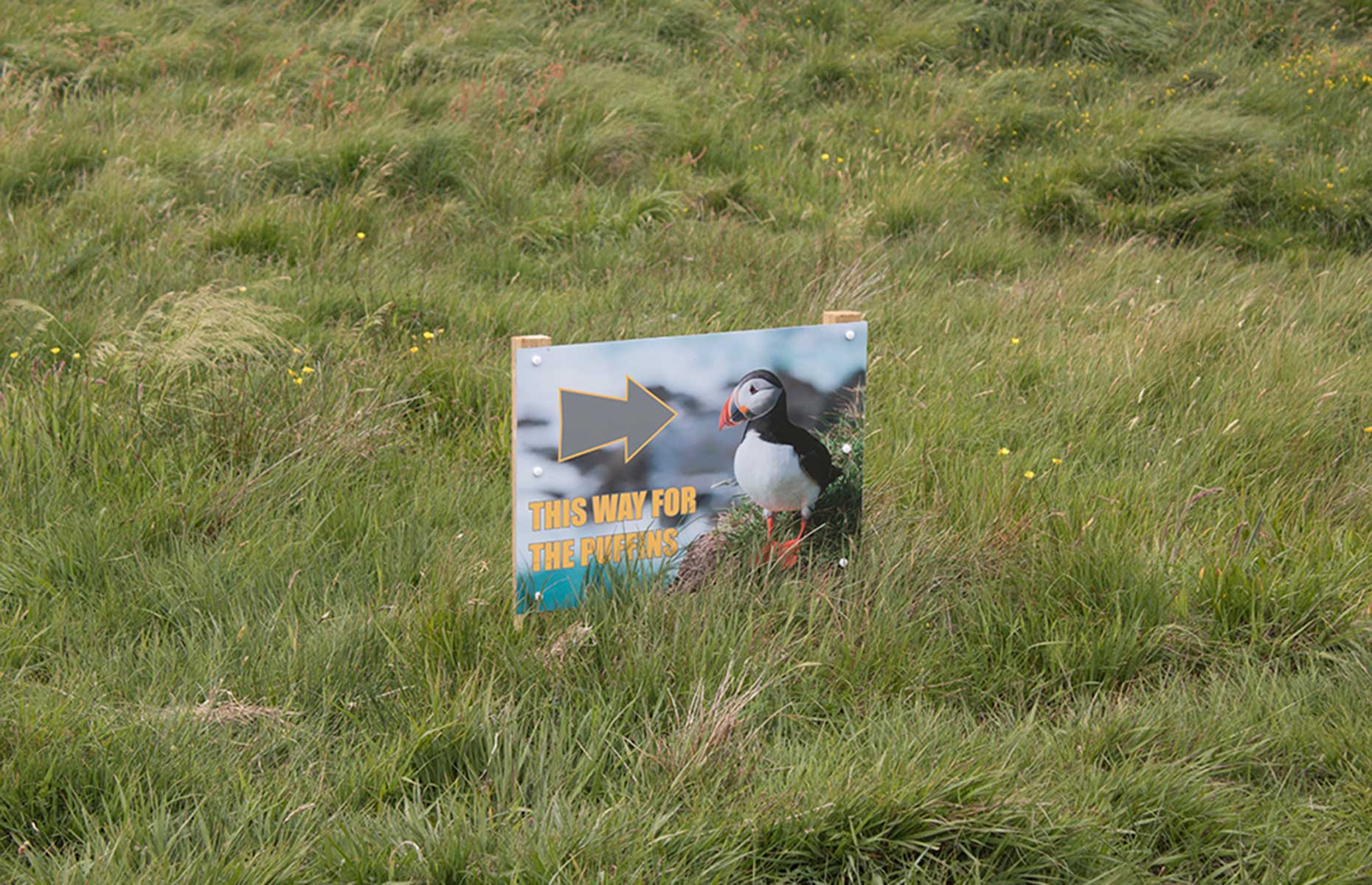 A puffin's this way sign in Staffa, Scotland