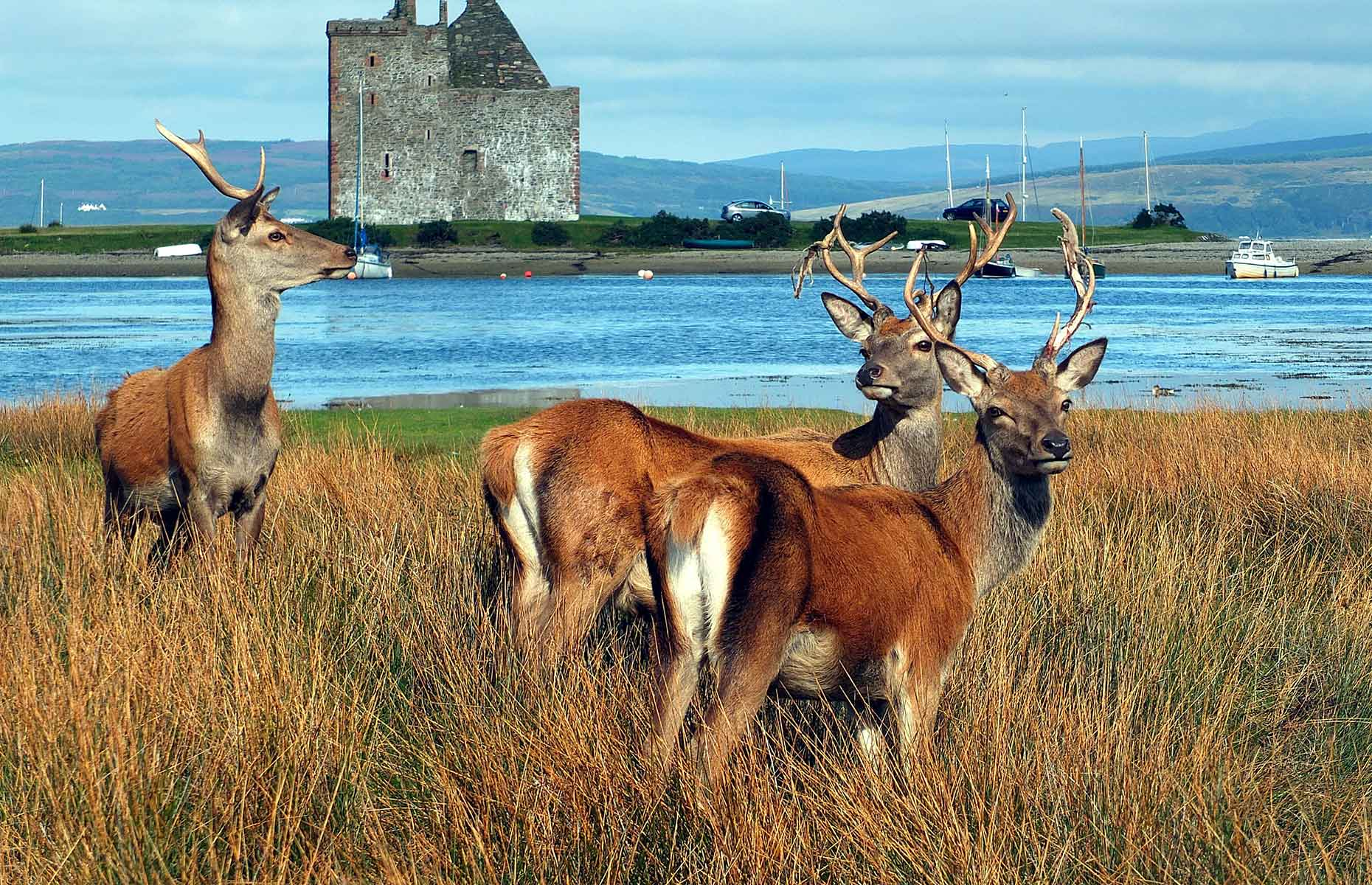 Deer on the Isle of Arran, Scotland (Image: Allan Napier/Shutterstock)