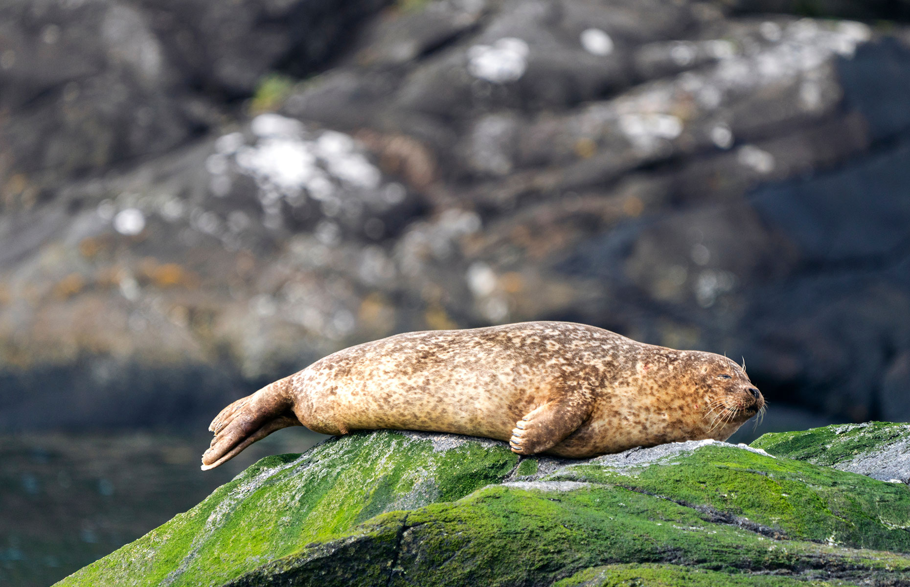 A seal relaxing at the foot of the Cuillins, Isle of Skye, Scotland (Image: Revati and Charles Victor/Shutterstock)
