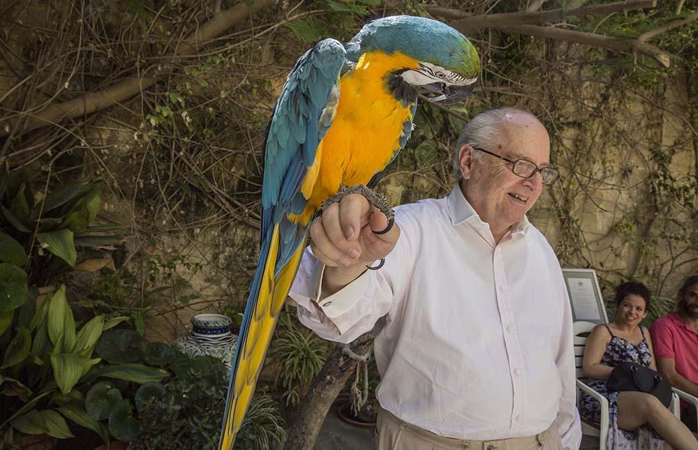 Parrot at Casa Rocca Piccola, Valletta, Malta