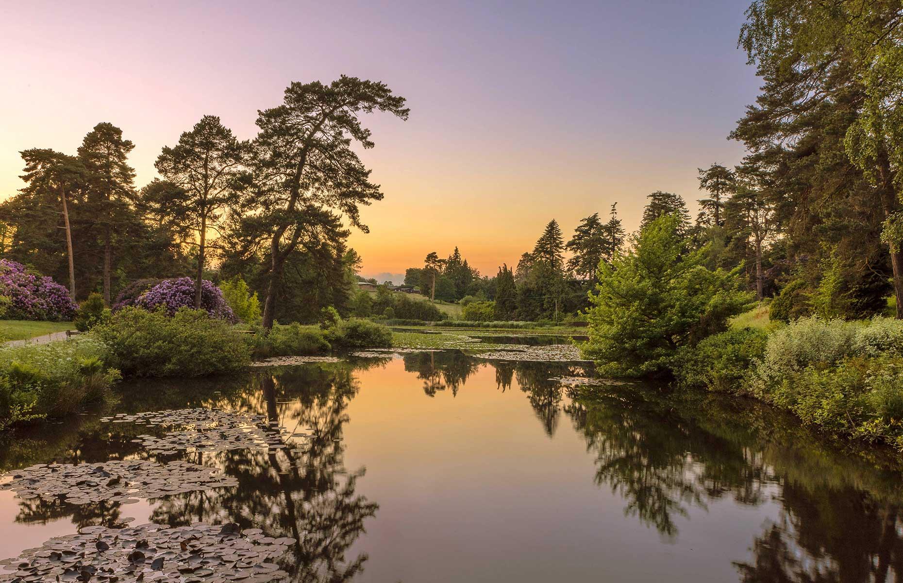 Bedgebury National Pinetum and Forest (Image: Fraser Allen/Shutterstock)