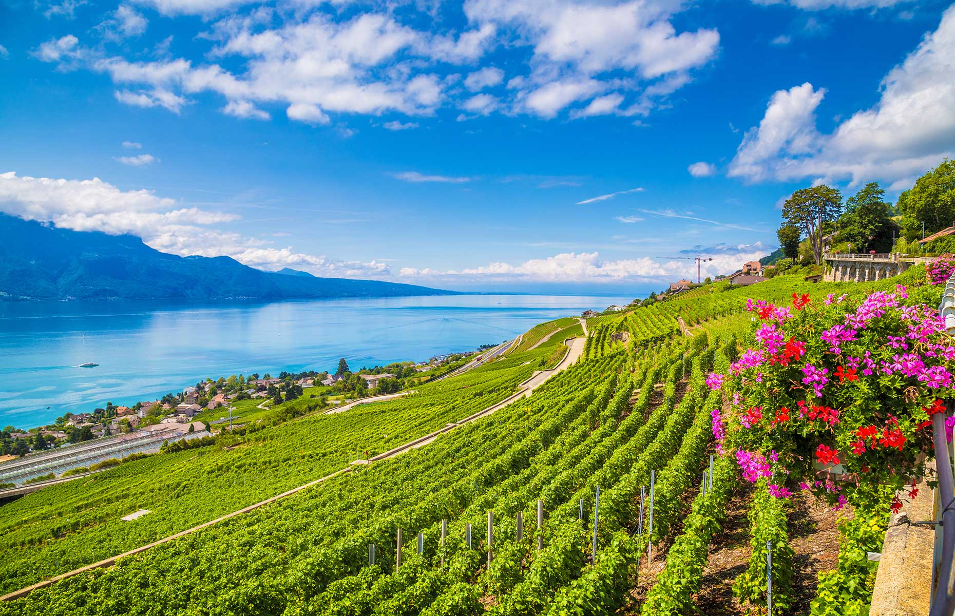 La Vaux region, just above Lausanne, is where you'll find the best wines