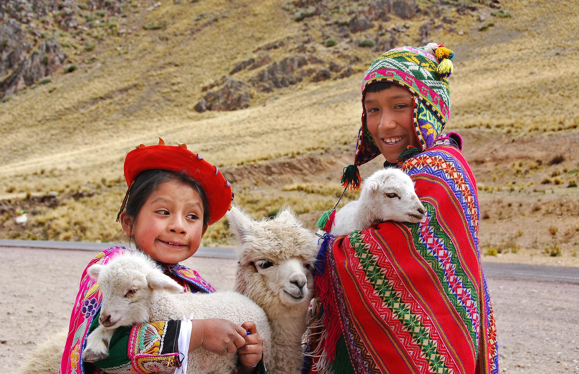 Llamas Peru