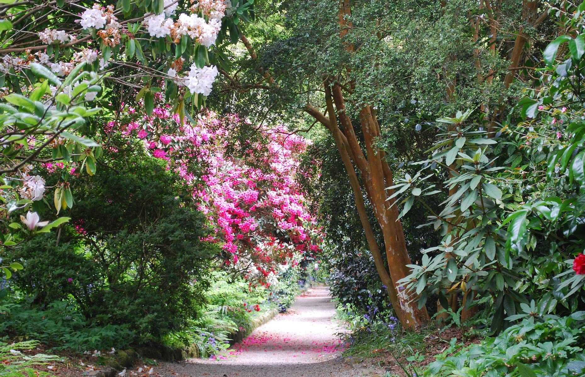 Trengwainton Garden, Cornwall (Image: Martin Stone/Flickr/CC BY-SA 2.0)