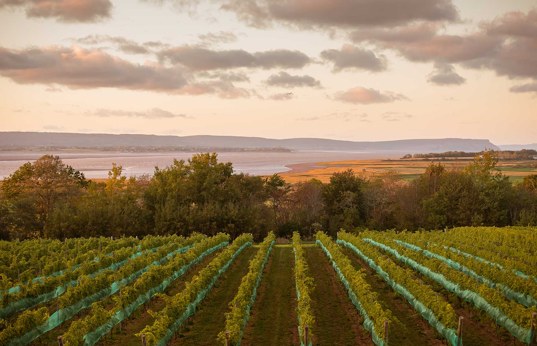 Lightfoot and Wolfville Winery