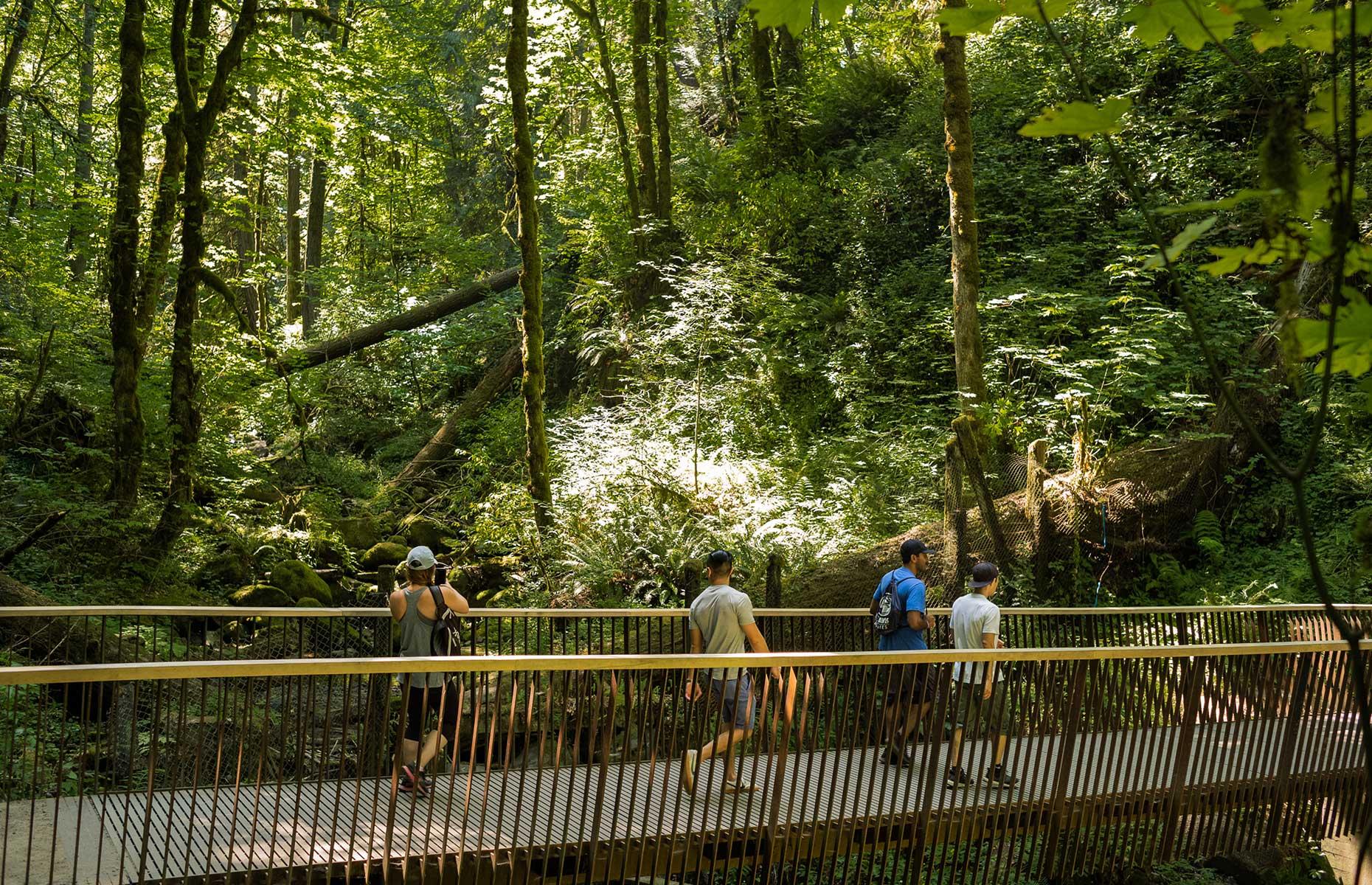 Forest Park hiking trails, Portland, Oregon (Image: Justin Katigbak/Travel Portland)