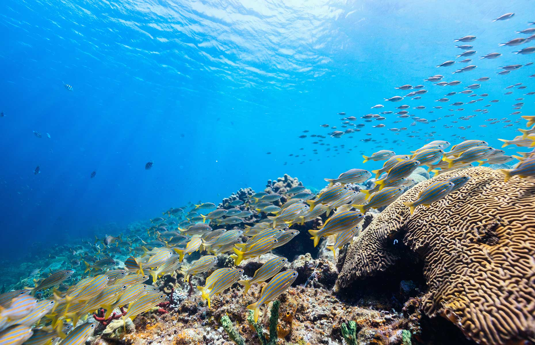 Snorkelling in Saint Lucia