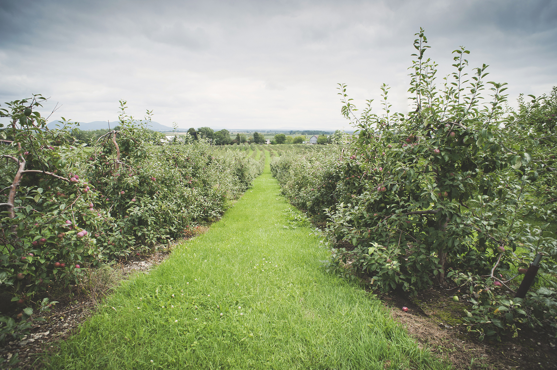 Orchard in Rougemont