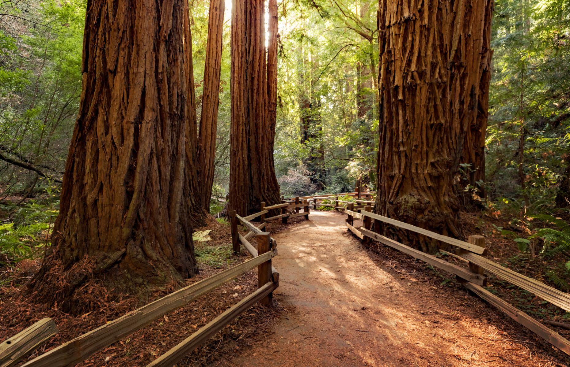 Muir Woods National Monument (Image: topseller/Shutterstock)