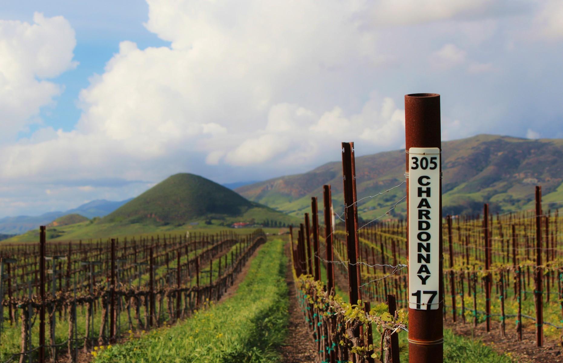 Vineyard in San Luis Obispo (Image: ThoseLittleWings/Shutterstock)