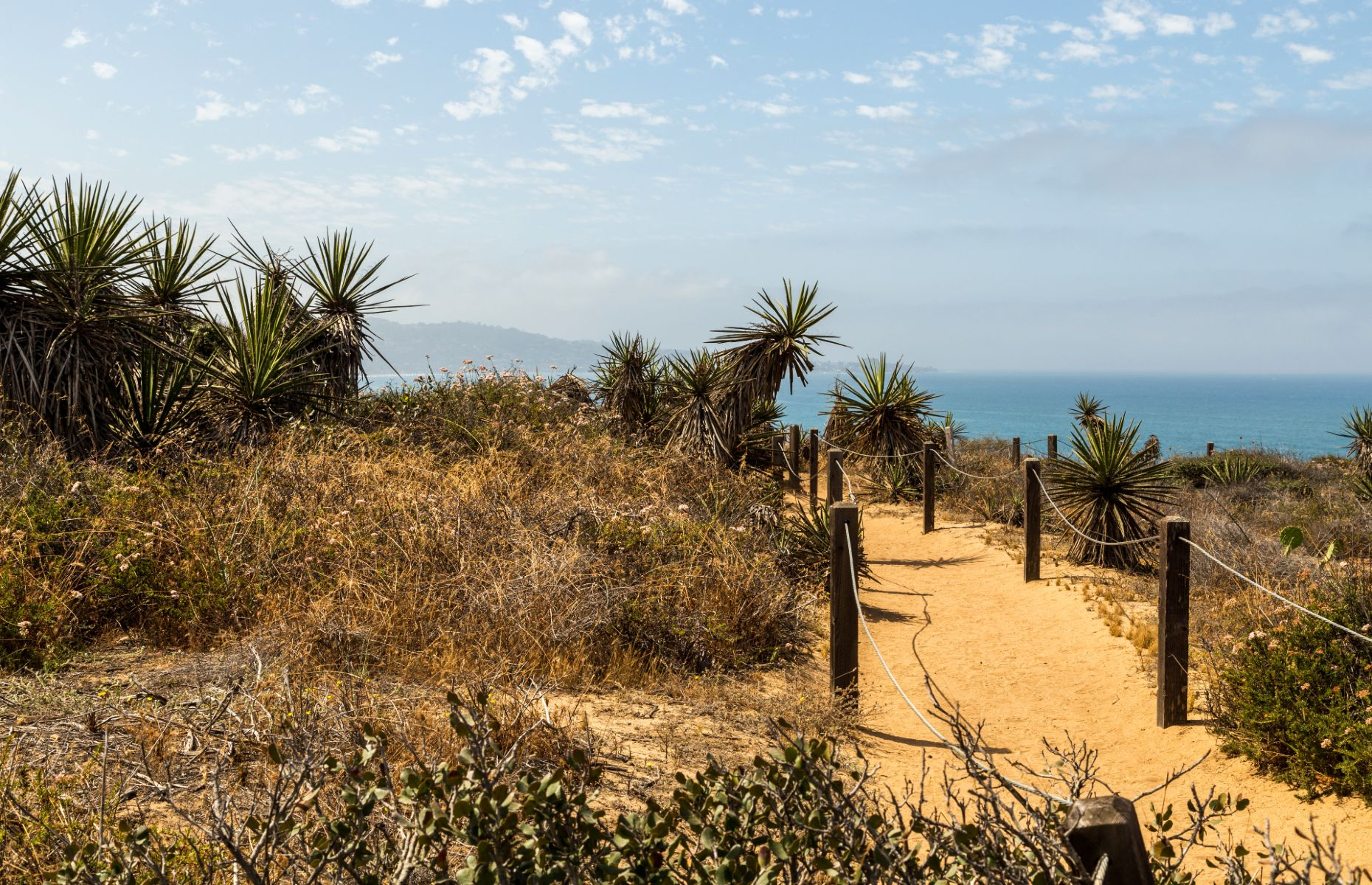 Torrey Pines State Natural Reserve (Image: ZAB Photographie/Shutterstock)