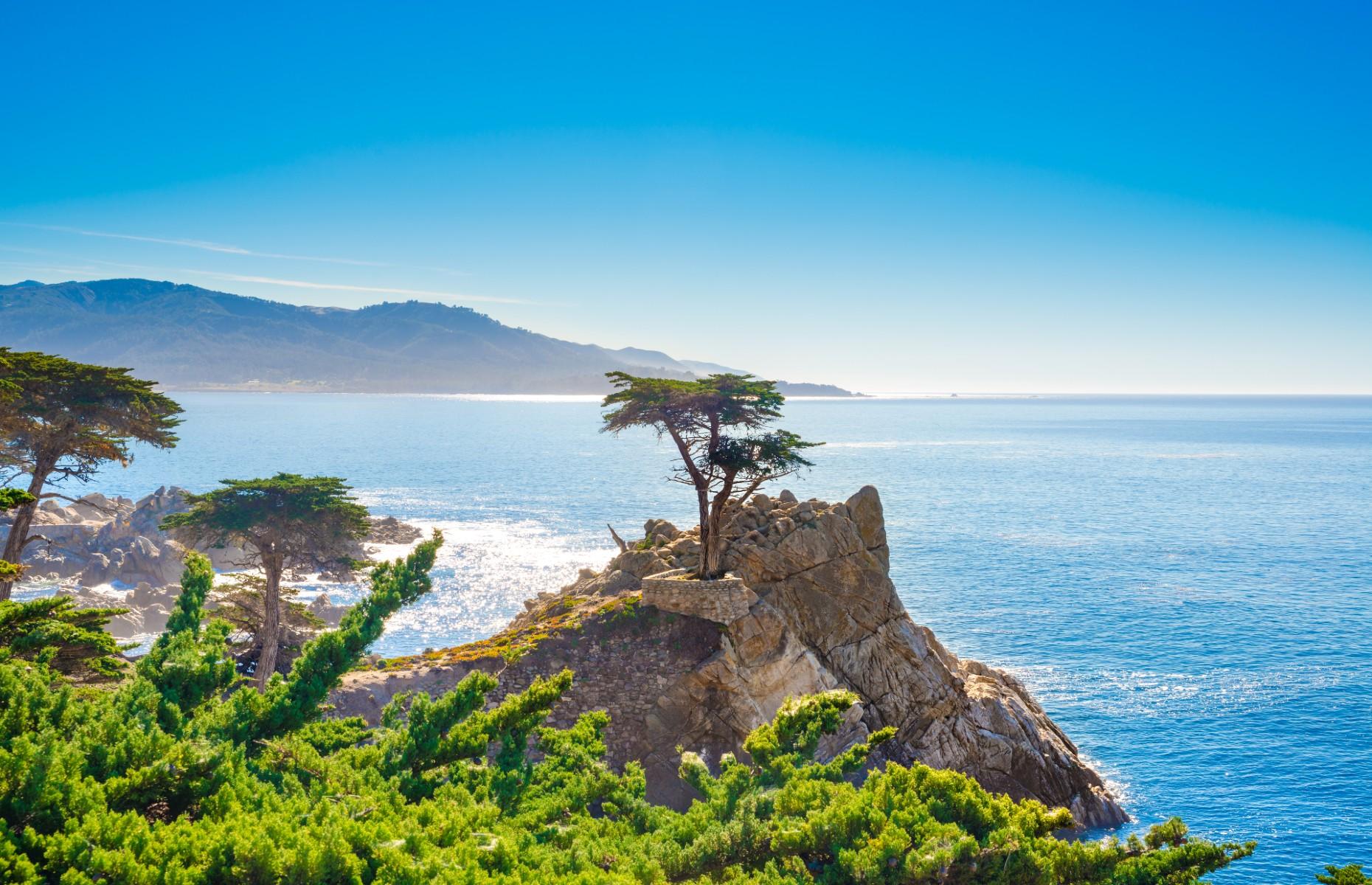 Lone cypress tree in Carmel (Image: Alexander Demyanenko/Shutterstock)