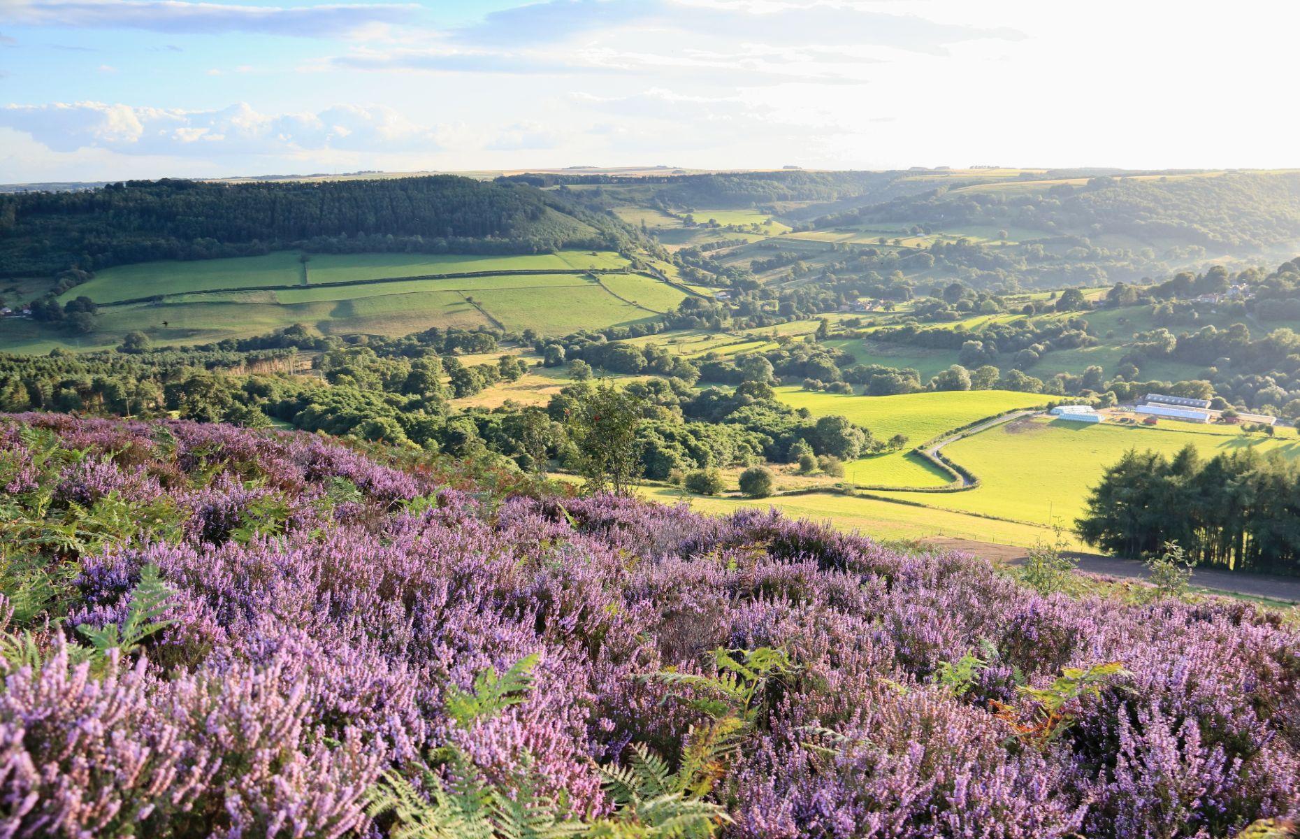 North York Moors countryside (Image: Bewickswan/Shutterstock)
