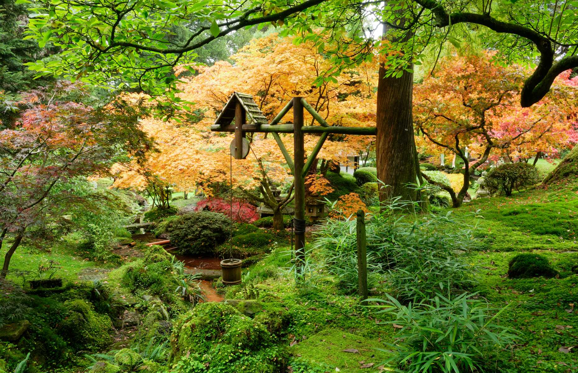 Japanese Garden in Cheshire