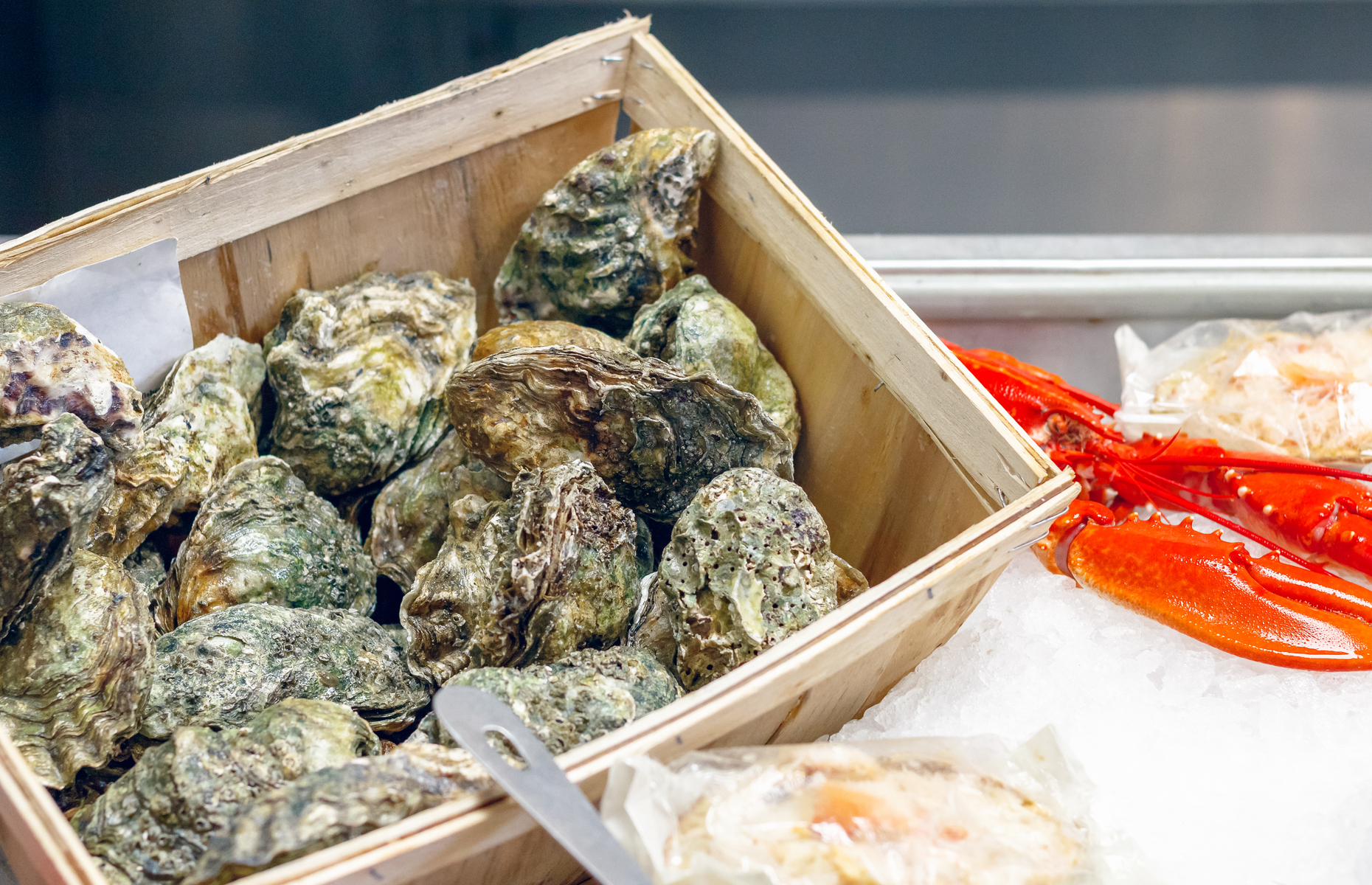 Oysters at market