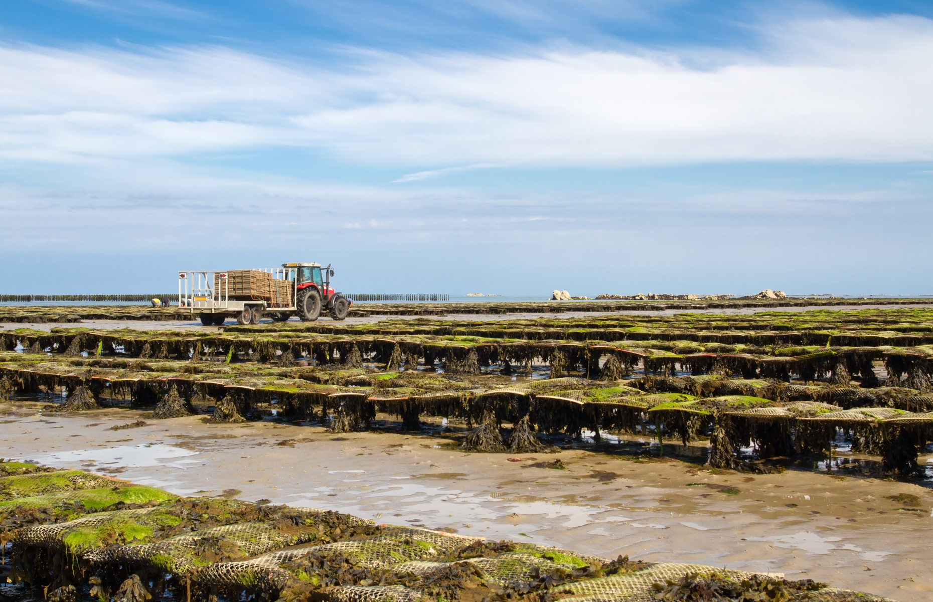 Oyster beds