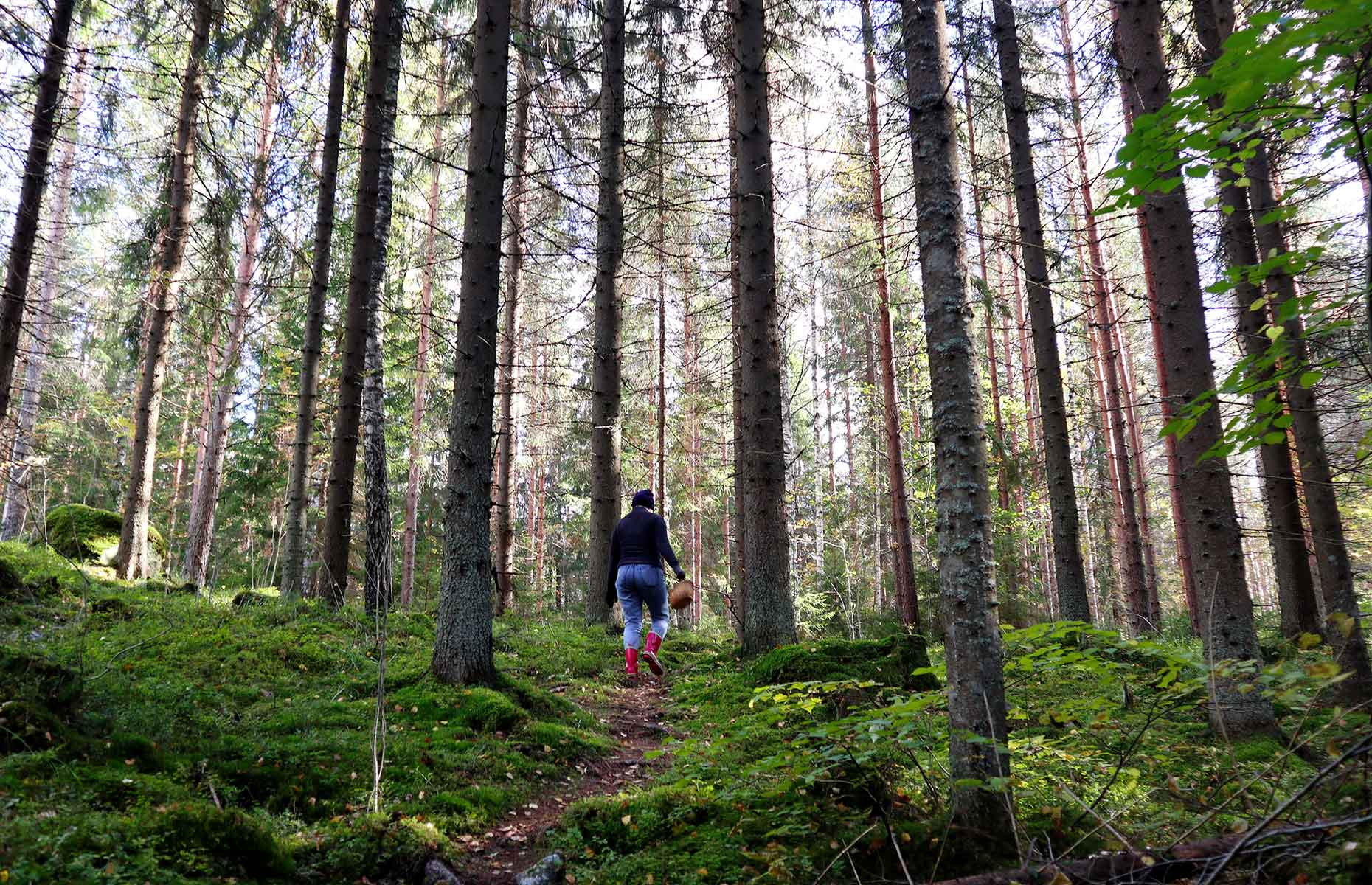 Foraging in the forest (Image: SariMe/Shutterstock)