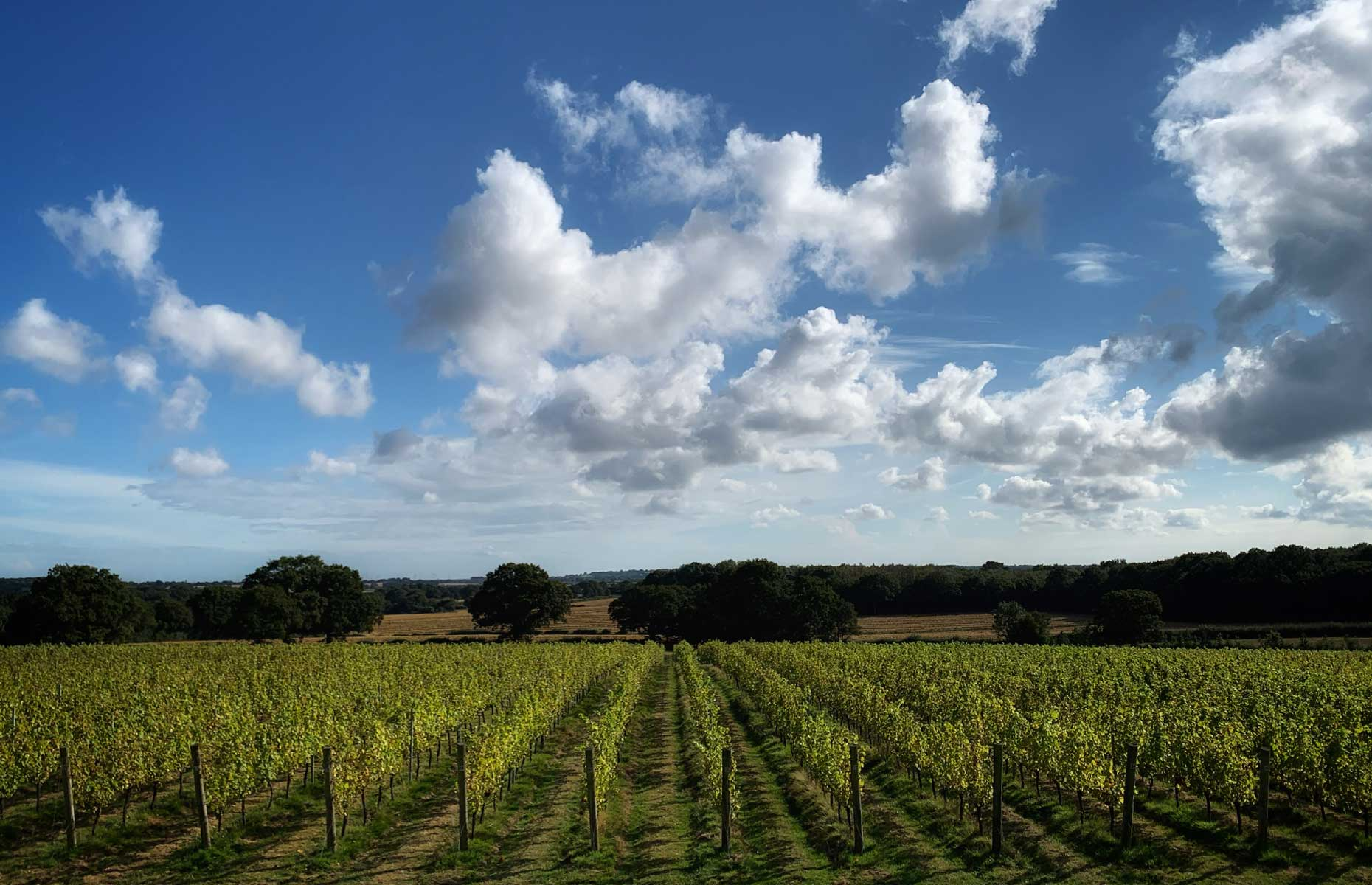 Woodchurch Wines vineyard photographed in September 2021 (Image: Laura Jackson/loveFOOD)