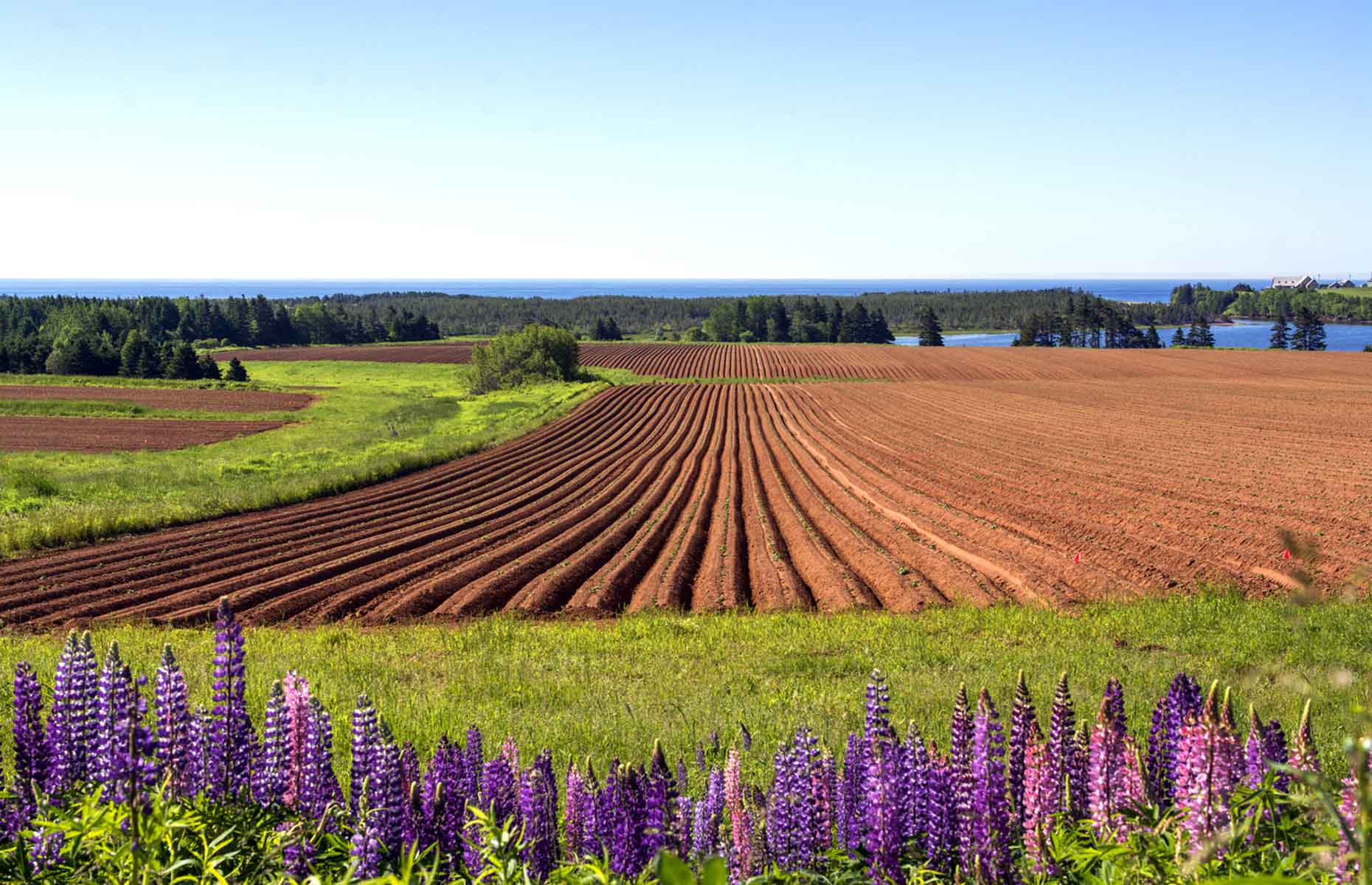 Farmland on PEI