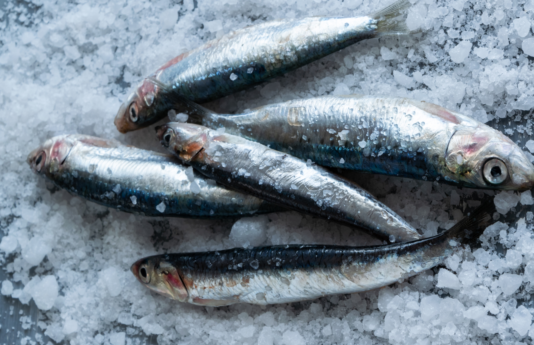 Anchovies in salt (Image: 826A IA/Shutterstock)