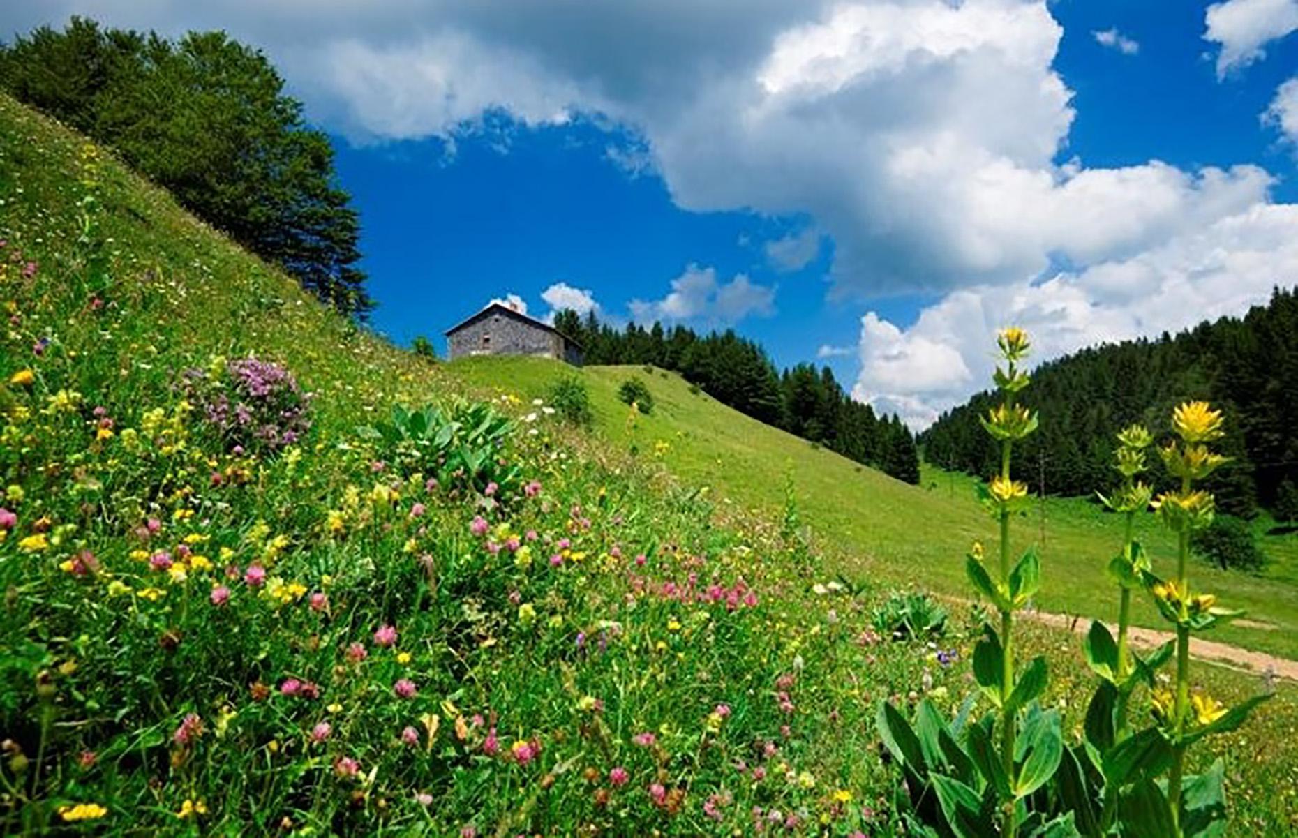 Jura hills