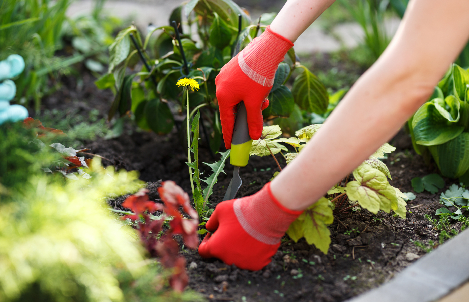 Keep on top of garden chores or you'll have to call the professionals in. Image: Kostenko Maxim / Shutterstock