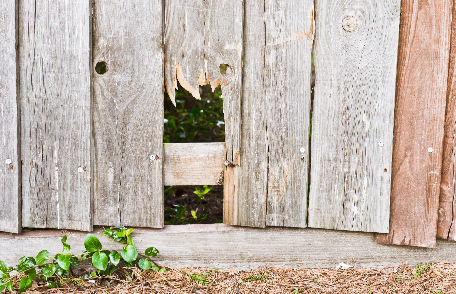 Leaving broken fence posts to linger could lead to more costly repairs. Image: Tom Gowanlock / Shutterstock