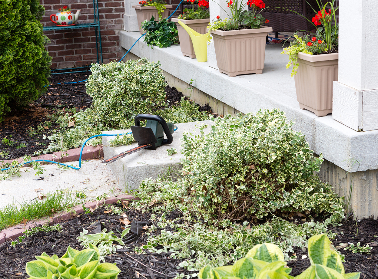 Cut back to see what's really going on when you start a garden. Image: Shutterstock