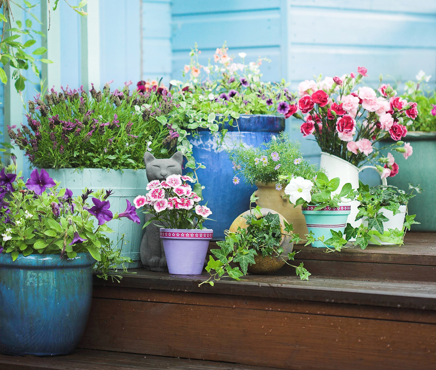 Pot up bright flowers for instant colour. Image: Valda / Shutterstock