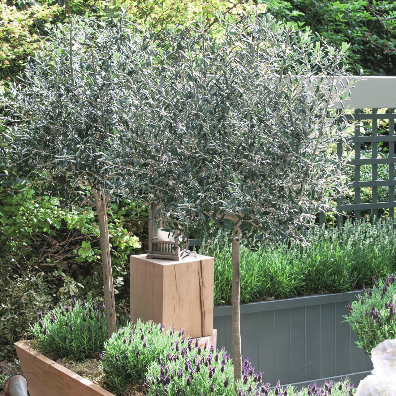 Image: Saga Gardening
