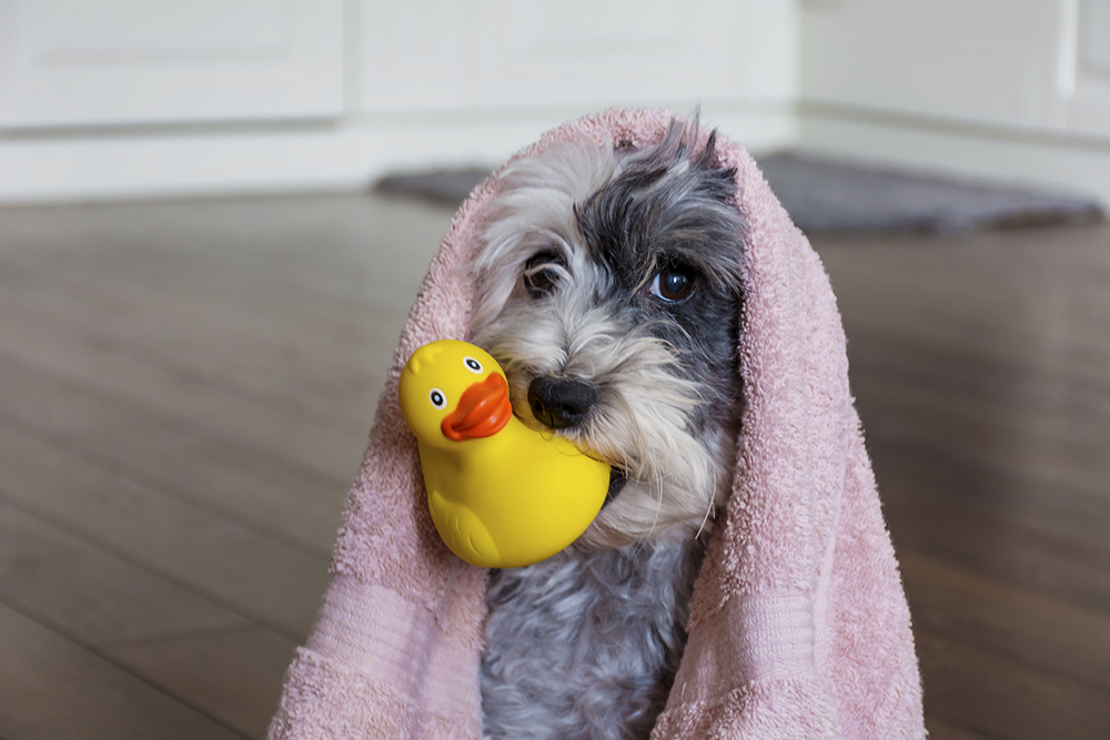 Pet toys can be a breeding ground for germs. Image: Boryana Manzurova/Shutterstock