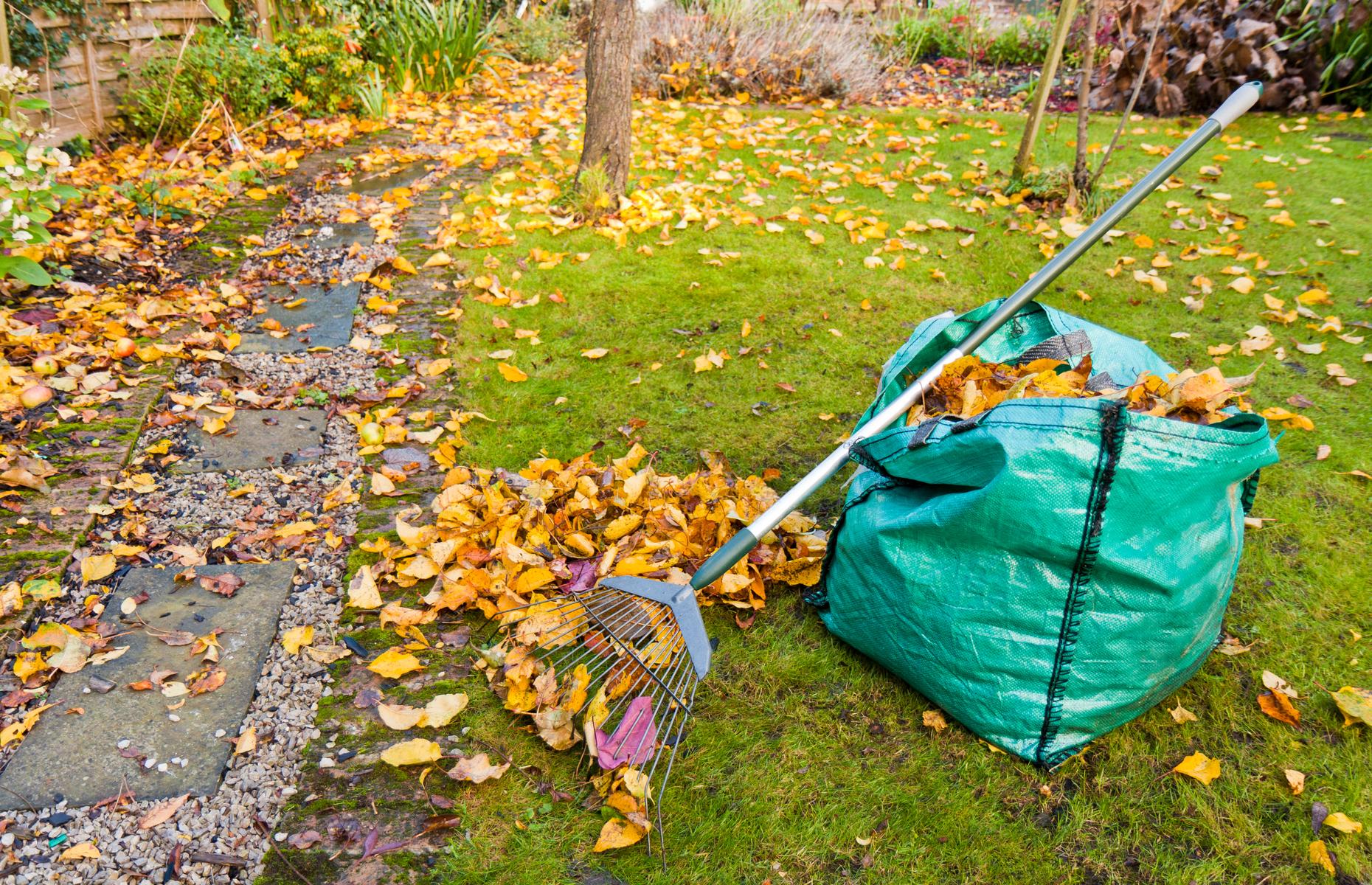 Картинки убирать листья