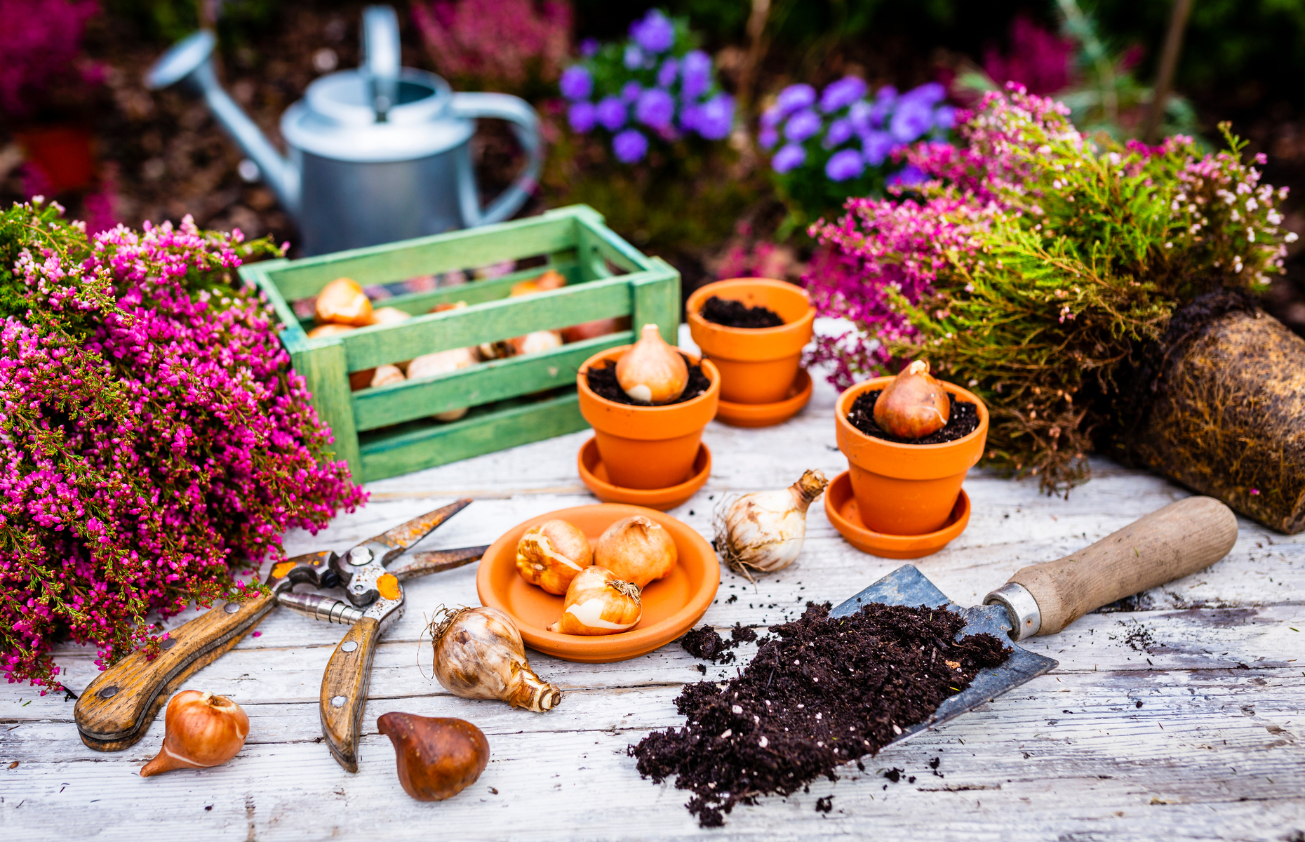 You can get everything from ornamental flowers to bulbs and seeds delivered to your door. Image: iMarzi / Shutterstock