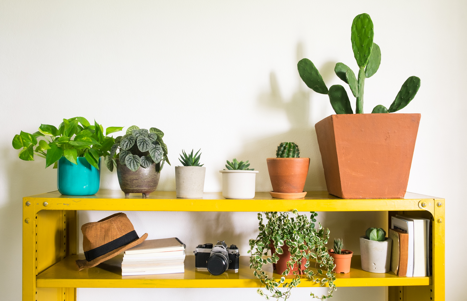If you don't have a garden, succulents and house plants can bring the great outdoors inside. Image: rattiya lamrod / Shutterstock